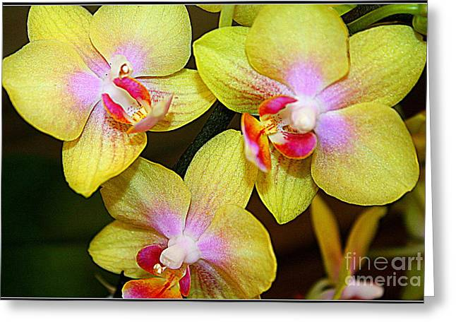 Golden Orchids Greeting Card by Dora Sofia Caputo Photographic Art and Design