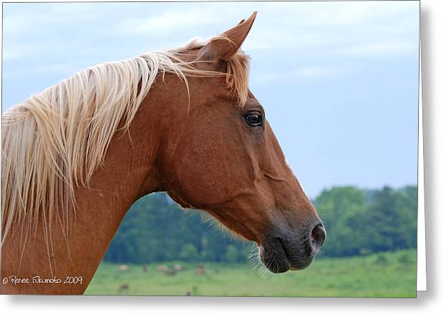 Crazy Horse Photographs Greeting Cards - Golden Overseer Greeting Card by Renee Forth-Fukumoto