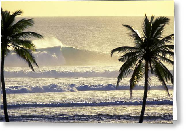 Green Power Greeting Cards - Golden Palms Greeting Card by Sean Davey