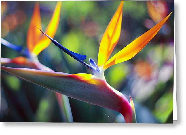 Spiegel Greeting Cards - Golden Paradise Greeting Card by Rita Spiegel