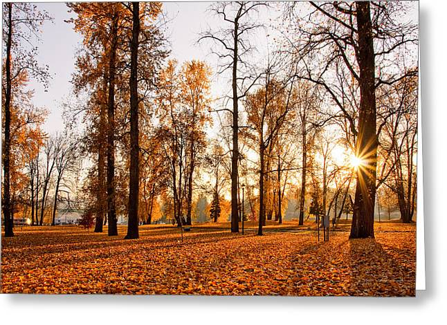 Htc Greeting Cards - Golden Park Greeting Card by Rusty Muyuela
