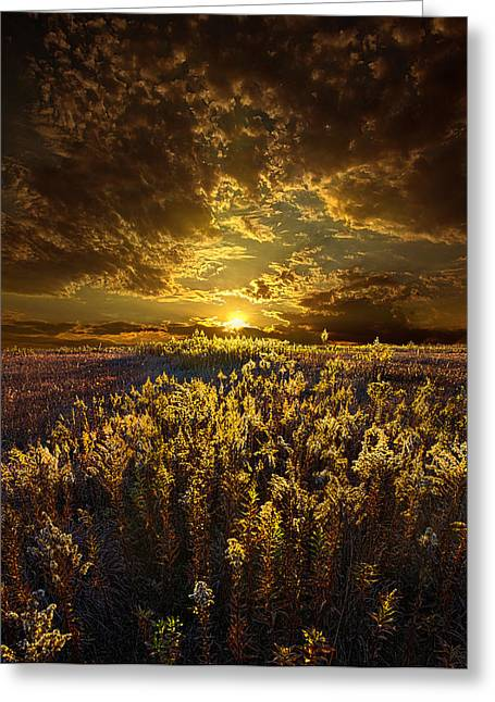 Golds Greeting Cards - Golden Greeting Card by Phil Koch