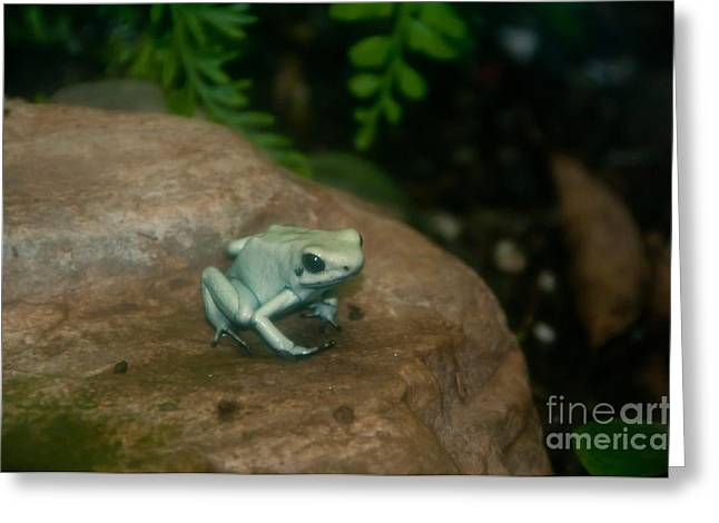 Morph Greeting Cards - Golden Poison Frog Mint Green Morph Greeting Card by Mark Newman