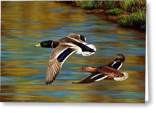 Mallards Greeting Cards - Golden Pond Greeting Card by Crista Forest