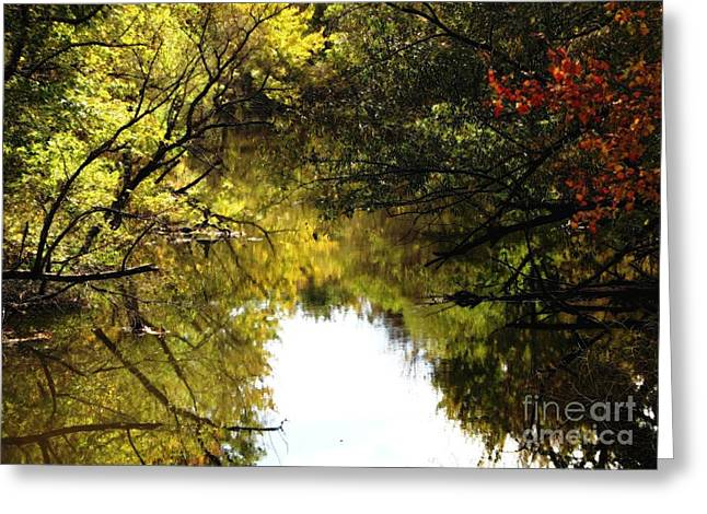 Tree Leaf On Water Digital Art Greeting Cards - Golden Pond with Oil Painting Effect Greeting Card by Rose Santuci-Sofranko