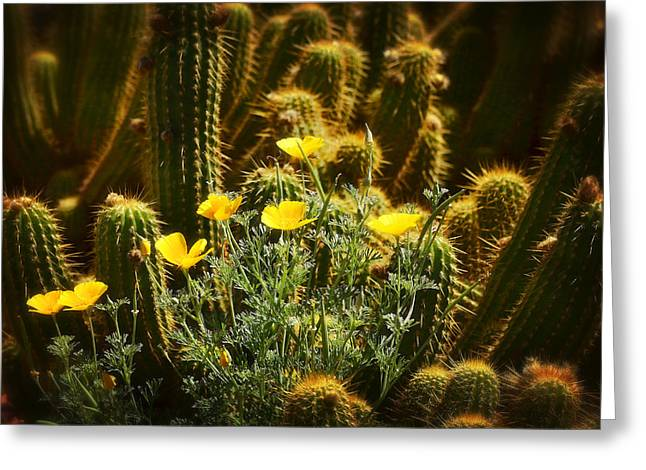 Torch Cactus Greeting Cards - Golden Poppies and Torch Cactus  Greeting Card by Saija  Lehtonen