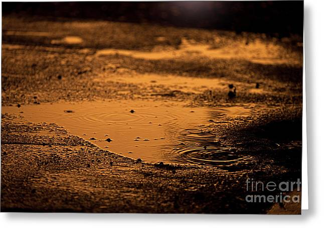Puddle Greeting Cards - Golden Raindrops at Dusk Greeting Card by Cindy Singleton
