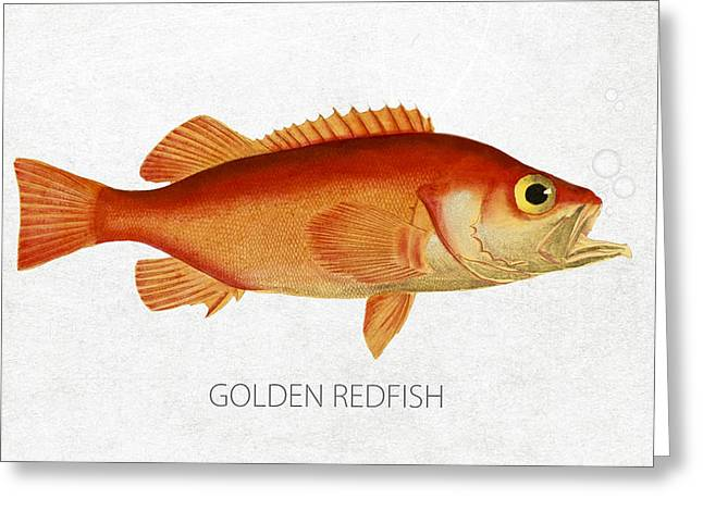 Golden Redfish Greeting Card by Aged Pixel