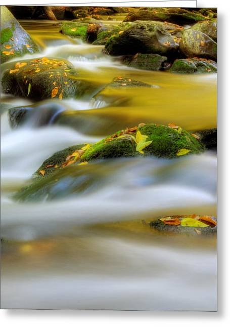 Moss-covered Greeting Cards - Golden Reflections of Fall Greeting Card by Greg Mimbs