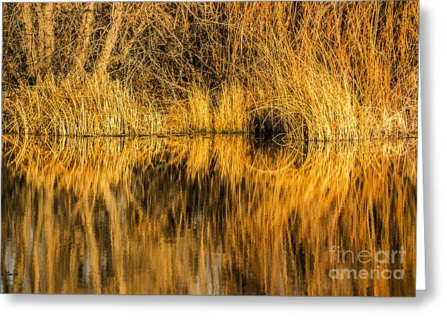 Reflection In Water Greeting Cards - Golden Reflections Greeting Card by Sue Smith