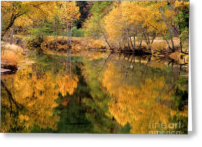 Terry Garvin Greeting Cards - Golden Reflections Greeting Card by Terry Garvin