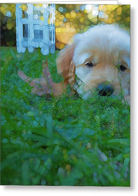 Golden Retriever Puppies Greeting Cards - Golden Retriever Abstract Puppy Love Greeting Card by Dan Sproul