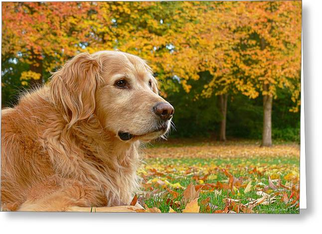 Sporting Dog Greeting Cards - Golden Retriever Dog Autumn Leaves Greeting Card by Jennie Marie Schell