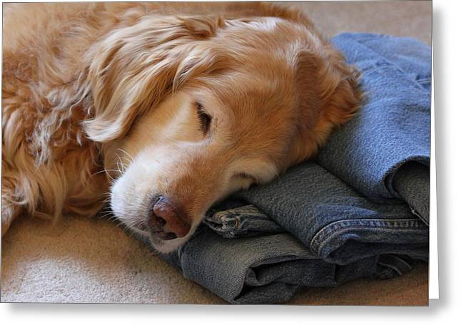 Golden Retriever Dog Forever On Blue Jeans Greeting Card by Jennie Marie Schell