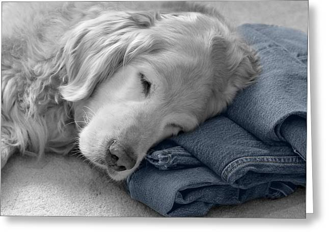 Levi Greeting Cards - Golden Retriever Dog Forever on Blue Jeans Monochrome Greeting Card by Jennie Marie Schell