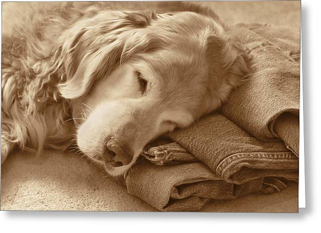 Levi Greeting Cards - Golden Retriever Dog on Forever on Blue Jeans Sepia Greeting Card by Jennie Marie Schell