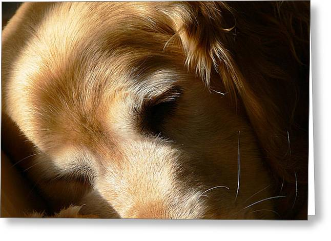 Golden Retriever Dog Sleeping in the Morning Light  Greeting Card by Jennie Marie Schell