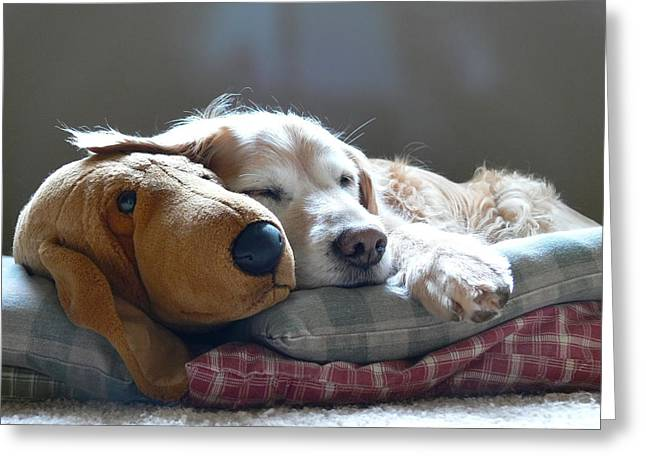 Golden Retriever Dog Sleeping with my Friend Greeting Card by Jennie Marie Schell