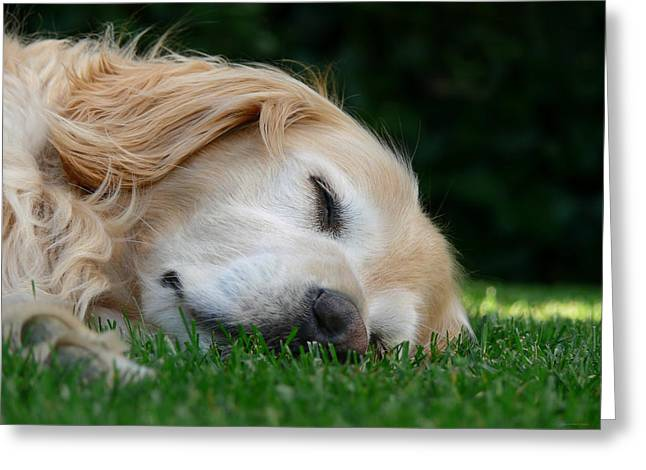 Sleeping Dogs Greeting Cards - Golden Retriever Dog Sweet Dreams Greeting Card by Jennie Marie Schell