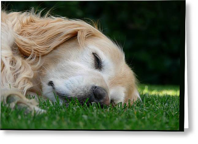 Golden Retriever Dog Sweet Dreams Greeting Card by Jennie Marie Schell