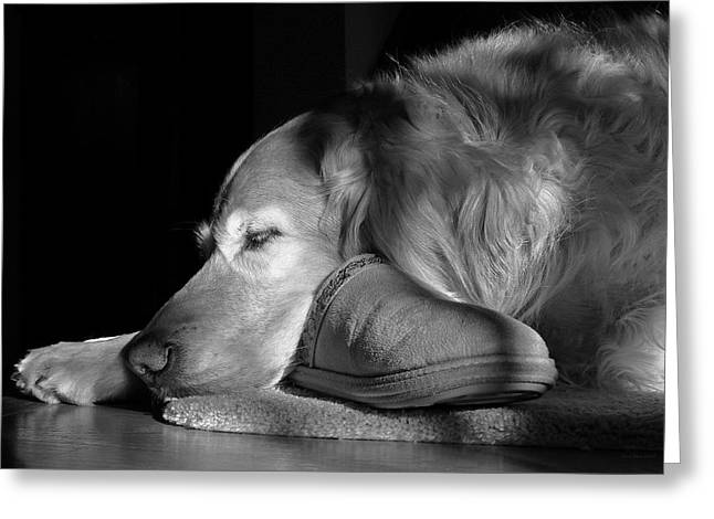 Golden Retriever dog with Master's Slipper Black and White Greeting Card by Jennie Marie Schell