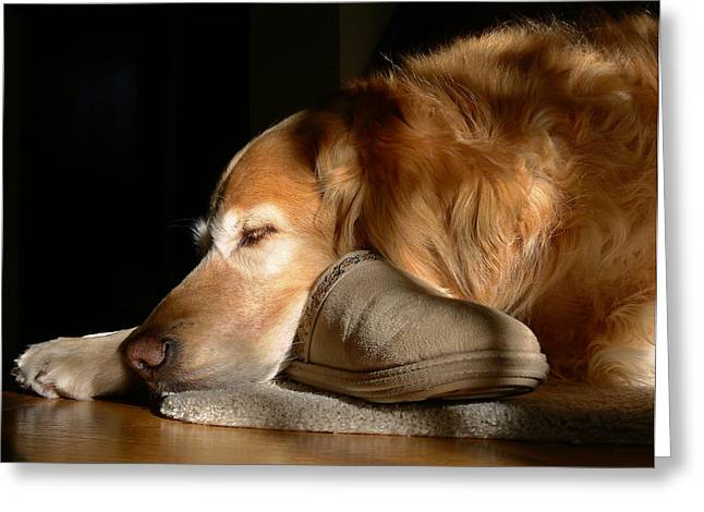 Sleeping Dogs Greeting Cards - Golden Retriever Dog with Masters Slipper Greeting Card by Jennie Marie Schell