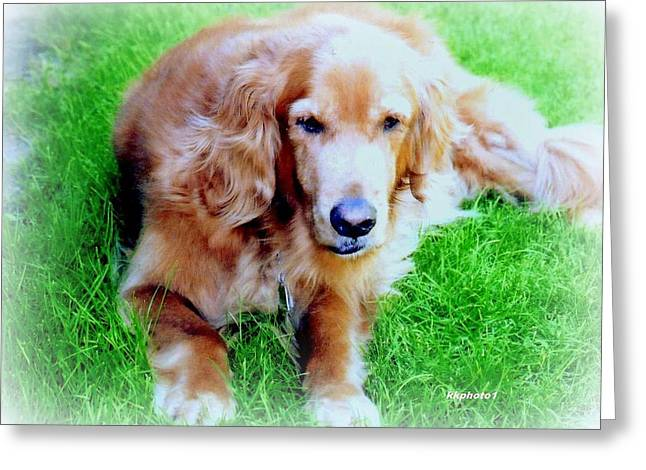 Retriever Prints Digital Art Greeting Cards - Golden Retriever Greeting Card by Kay Novy