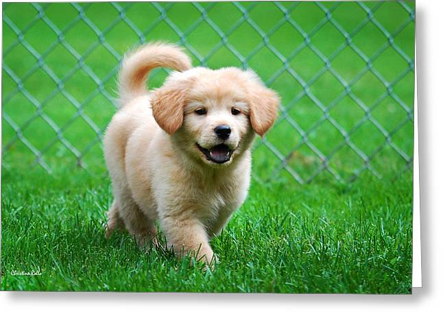 Wag Greeting Cards - Golden Retriever Puppy Greeting Card by Christina Rollo