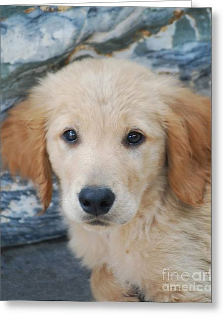 Puppies Photographs Greeting Cards - Golden Retriever Puppy  Greeting Card by Rames Ratyantarakor