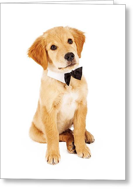 Bow Tie Greeting Cards - Golden Retriever Puppy Wearing Bow Tie Greeting Card by Susan  Schmitz