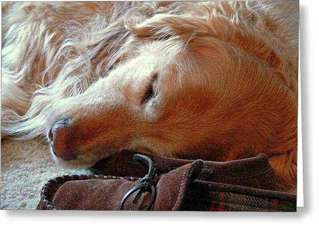 Sleeping Dogs Greeting Cards - Golden Retriever Sleeping with Dads Slippers Greeting Card by Jennie Marie Schell
