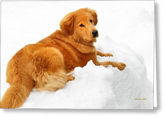 Soft Fur Greeting Cards - Golden Retriever Snowball Greeting Card by Christina Rollo