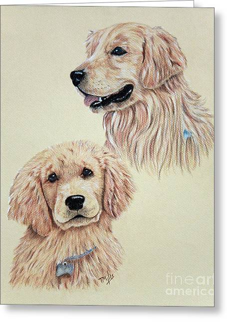 Golden Brown Drawings Greeting Cards - Golden Retriever Greeting Card by Terri Mills