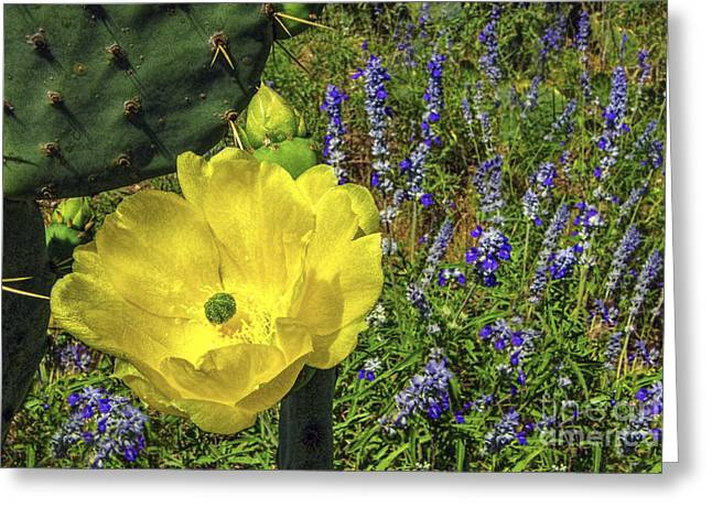New Riders Of The Purple Sage Greeting Cards - Golden Riders of the Purple Sage Greeting Card by Gary Holmes