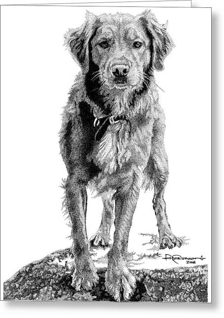 Dog Drawings Greeting Cards - Golden Greeting Card by Rob Christensen