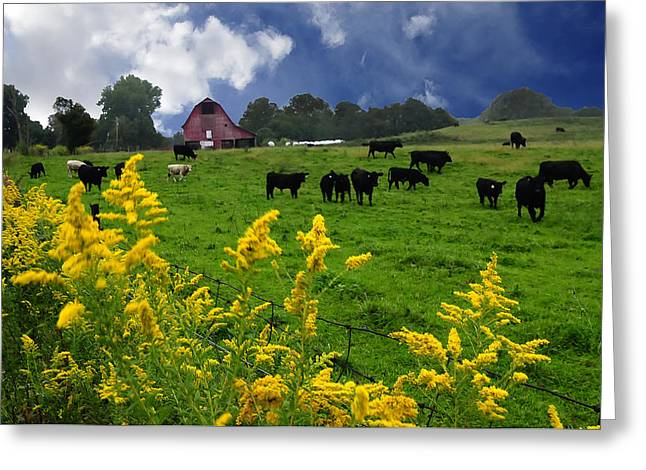 Randall Branham Greeting Cards - Golden Rod Black Angus Cattle  Greeting Card by Randall Branham