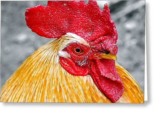 Gallus Gallus Greeting Cards - Golden Rooster Portrait Greeting Card by Kaye Menner