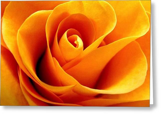 Rhonda Barrett Greeting Cards - Golden Rose Greeting Card by Rhonda Barrett