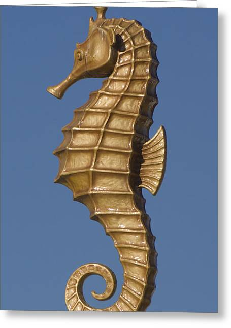 Best Sellers -  - Santa Cruz Ca Greeting Cards - Golden Seahorse Greeting Card by Jim and Emily Bush