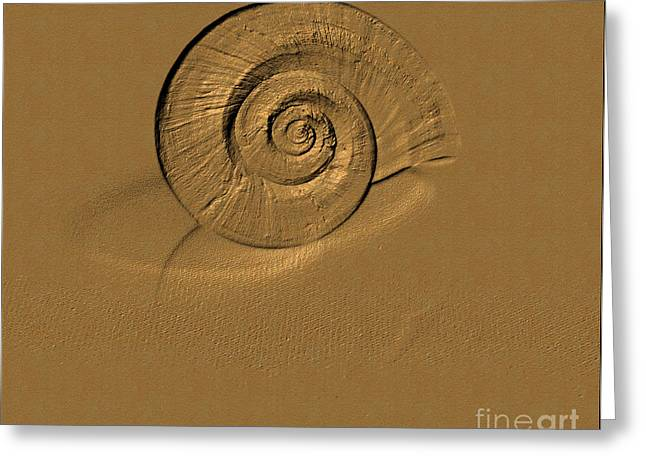 Amazing Greeting Cards - Golden Shell Greeting Card by Oksana Semenchenko