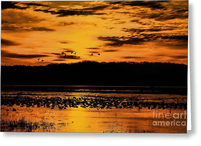 Wildlife Refuge. Greeting Cards - Golden Silhouettes  Greeting Card by Elizabeth Winter