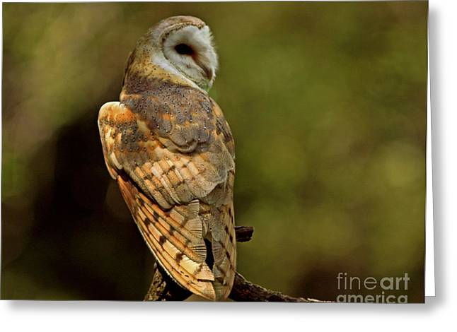 Shelley Myke Greeting Cards - Golden Spirit at the Forest Edge - Barn Owl Greeting Card by Inspired Nature Photography By Shelley Myke
