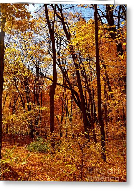 Mud Season Greeting Cards - Golden Splendor Greeting Card by Jacqueline Athmann
