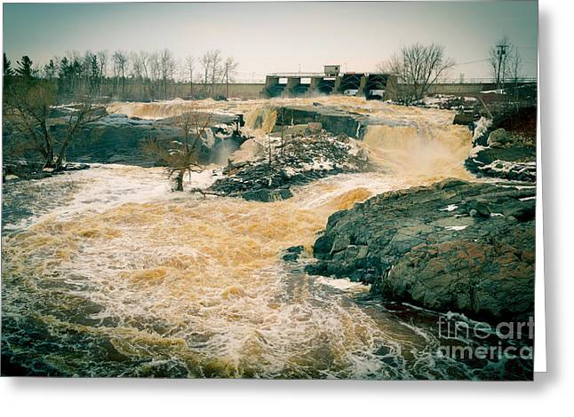 Cooke Greeting Cards - Golden Spring Rush At Thomson Dam Greeting Card by Shutter Happens Photography