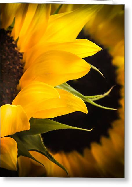 Solitaire Greeting Cards - Golden Summer Greeting Card by Karen Wiles
