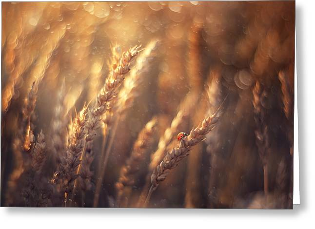 Summer Greeting Cards - Golden Summer Greeting Card by Magda  Bognar