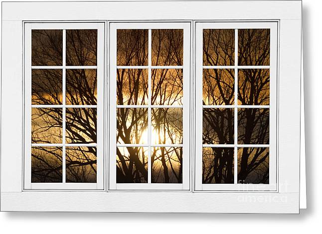 Night Cafe Greeting Cards - Golden Sun Silhouetted Tree Branches White Window View Greeting Card by James BO  Insogna
