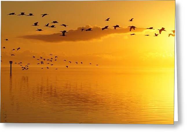 Golden Sunrise Flight Greeting Card by John Wall