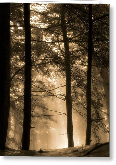 Tree In Golden Light Greeting Cards - Golden Sunrise In The Forest Greeting Card by Dan Sproul