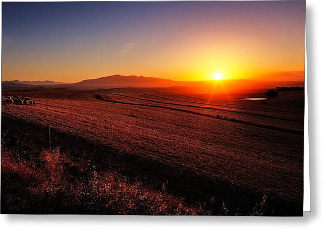 Hay Bale Greeting Cards - Golden Sunrise over Farmland Greeting Card by Johan Swanepoel
